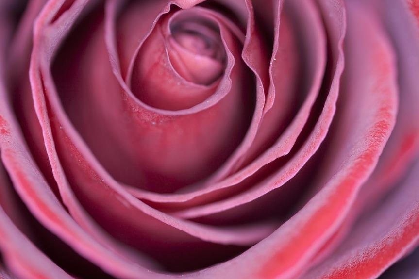 blossom-2314508_960_720